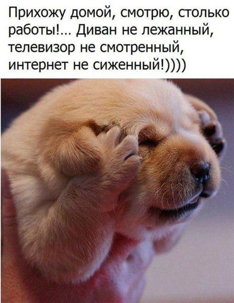 Смешные картинки до слез (35 фото)