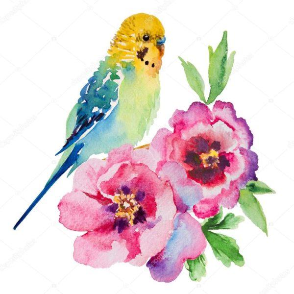 Рисунки для срисовки попугай (29 фото)