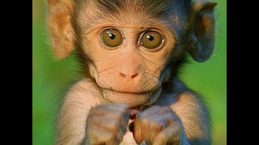 Смешные картинки обезьян (14 фото)