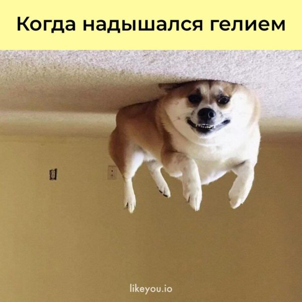 Смешные картинки с собаками с надписями (35 фото)