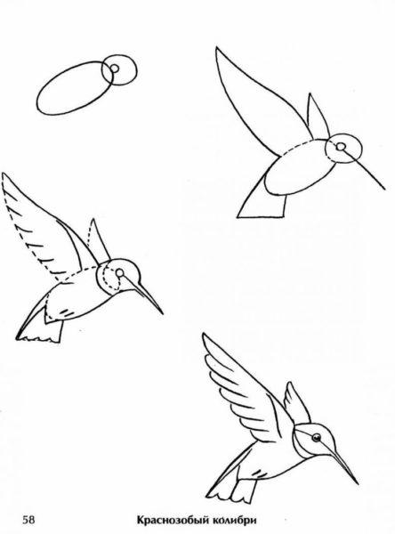 Рисунки карандашом поэтапно птица в полете (58 фото)