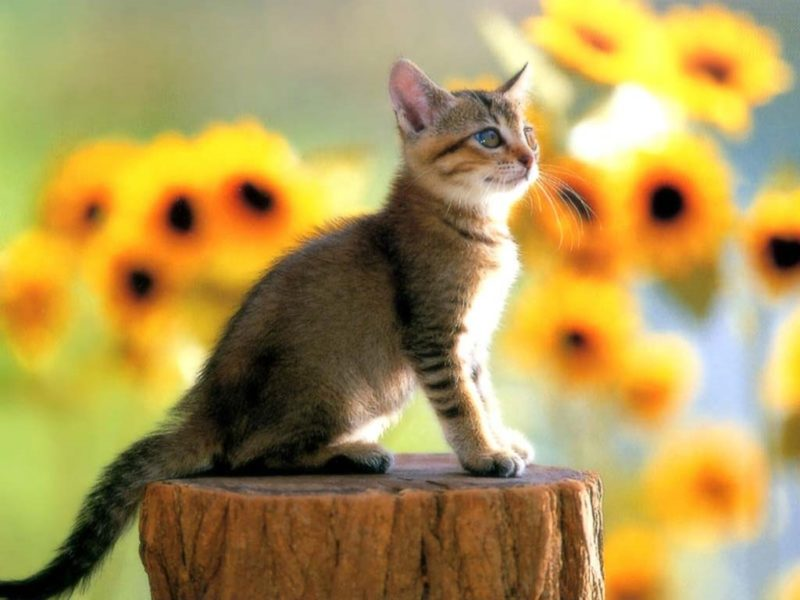 Картинки красивые котята (36 фото)