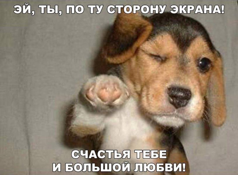 Смешные картинки для поднятия настроения (38 фото)
