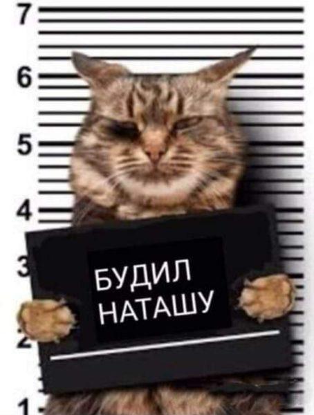 Смешные картинки про кошек с надписями (35 фото)