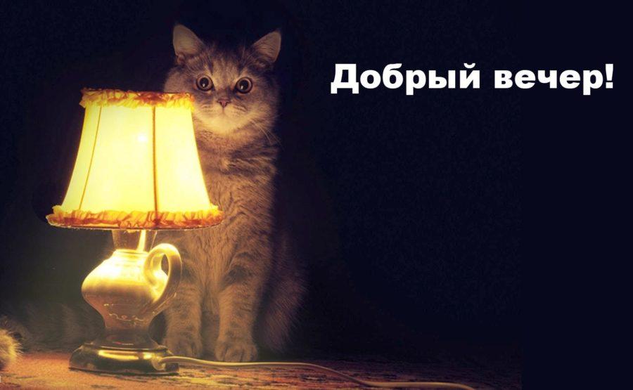 Смешные картинки вечера (14 фото)