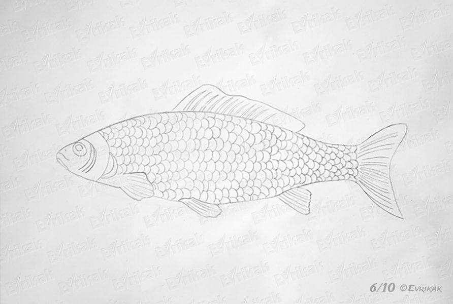 Рисунок карандашом сказка «Золотая рыбка» (20 фото)