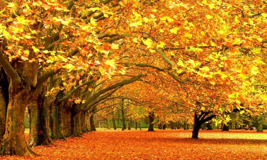 Смешные картинки про осень (35 фото)