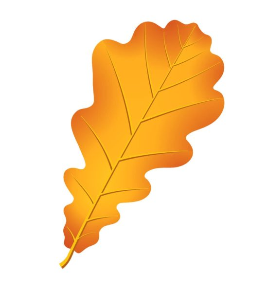 Рисунки осенних листьев карандашом (32 фото)