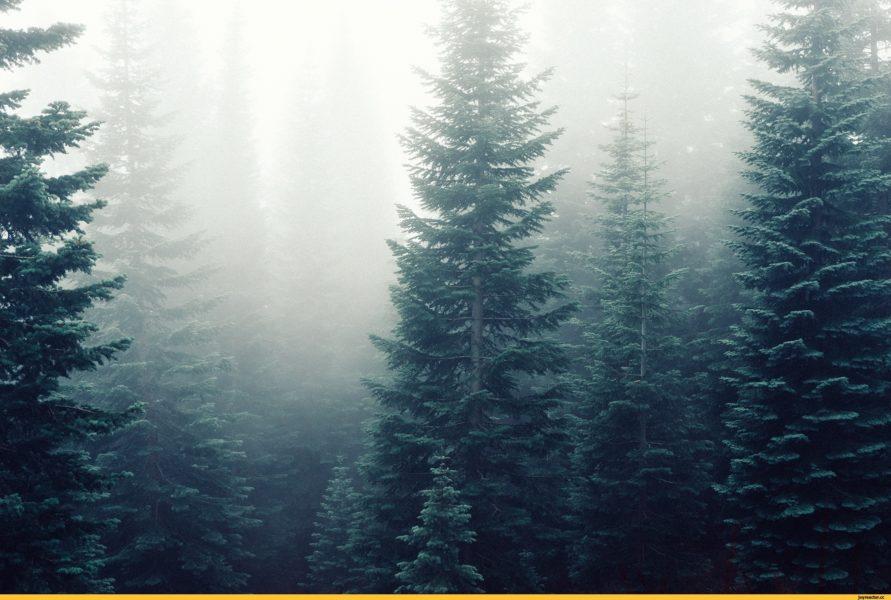 Картинки красивые леса (36 фото)