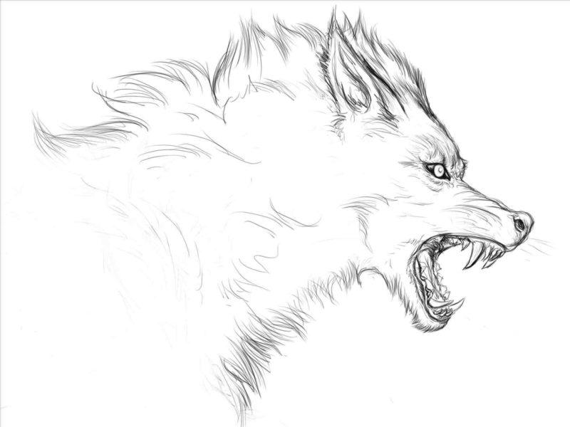 Картинки лисы для срисовки (27 фото)
