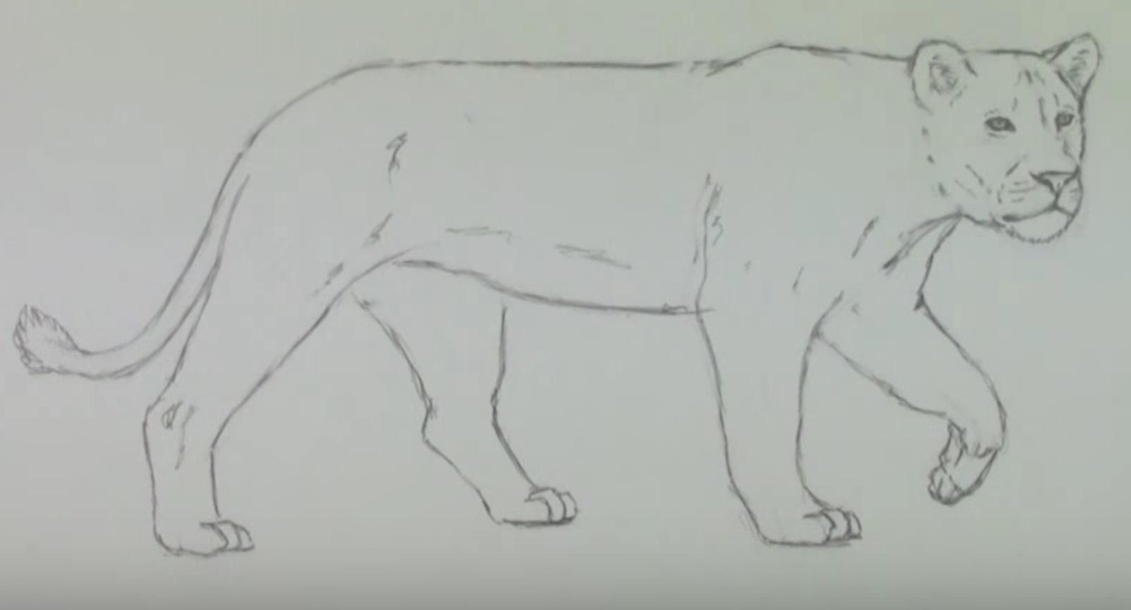 Рисунки карандашом для детей лев (30 фото)