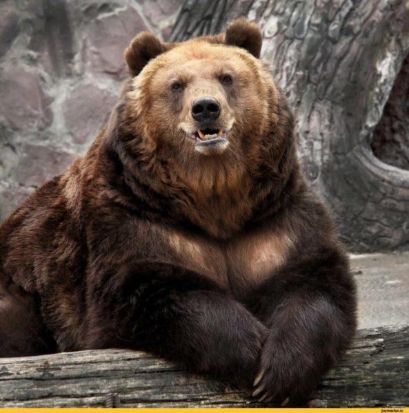 Смешные картинки с медведями (95 фото)