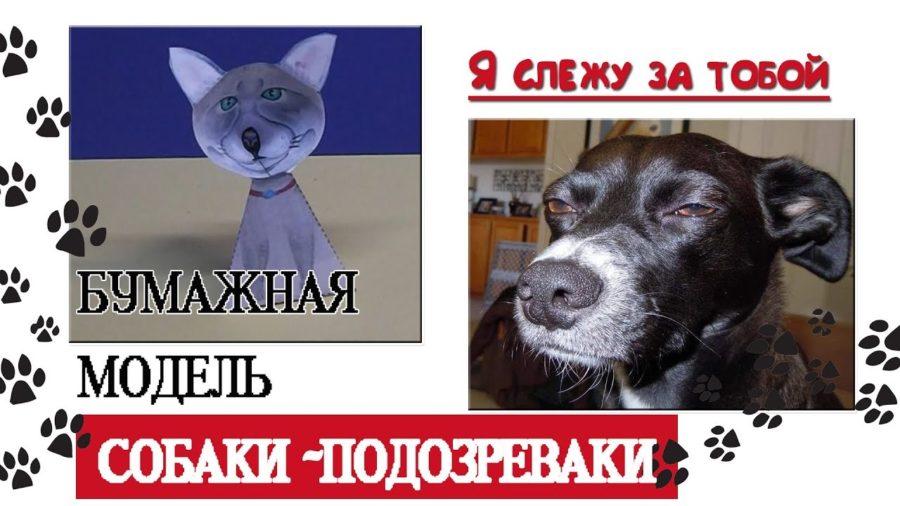 Собака подозревака (38 фото)