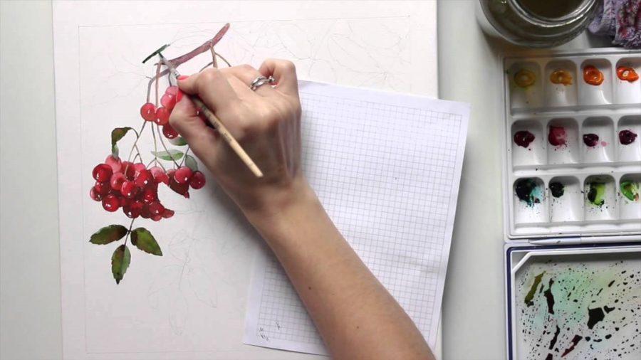 Рисунки карандашом рябина (22 фото)