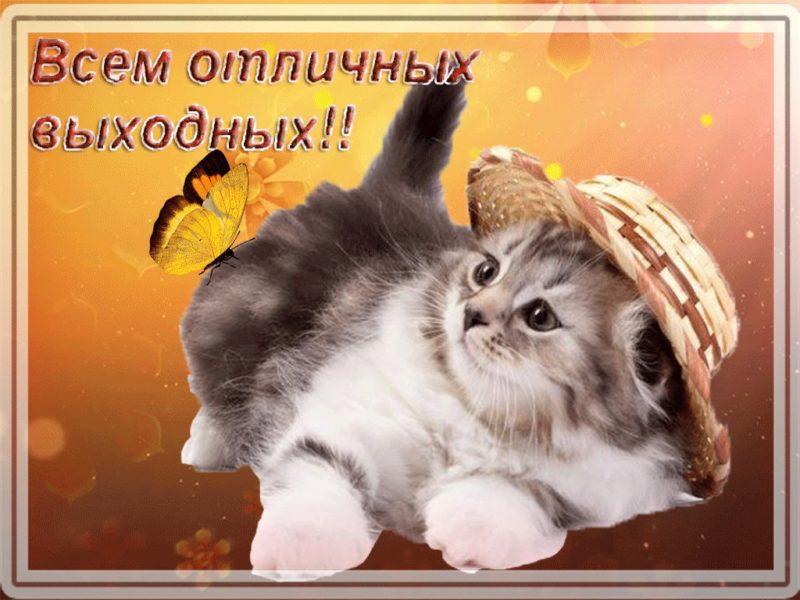 Смешные картинки «Добрый день!» (28 фото)