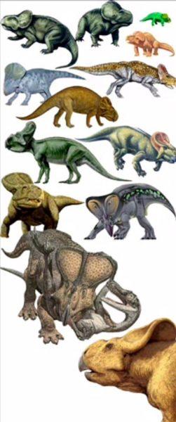 Картинки виды динозавров с названиями (28 фото)